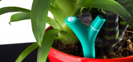 1392758208516 520x245 - Test du capteur pour plante Flower Power de Parrot