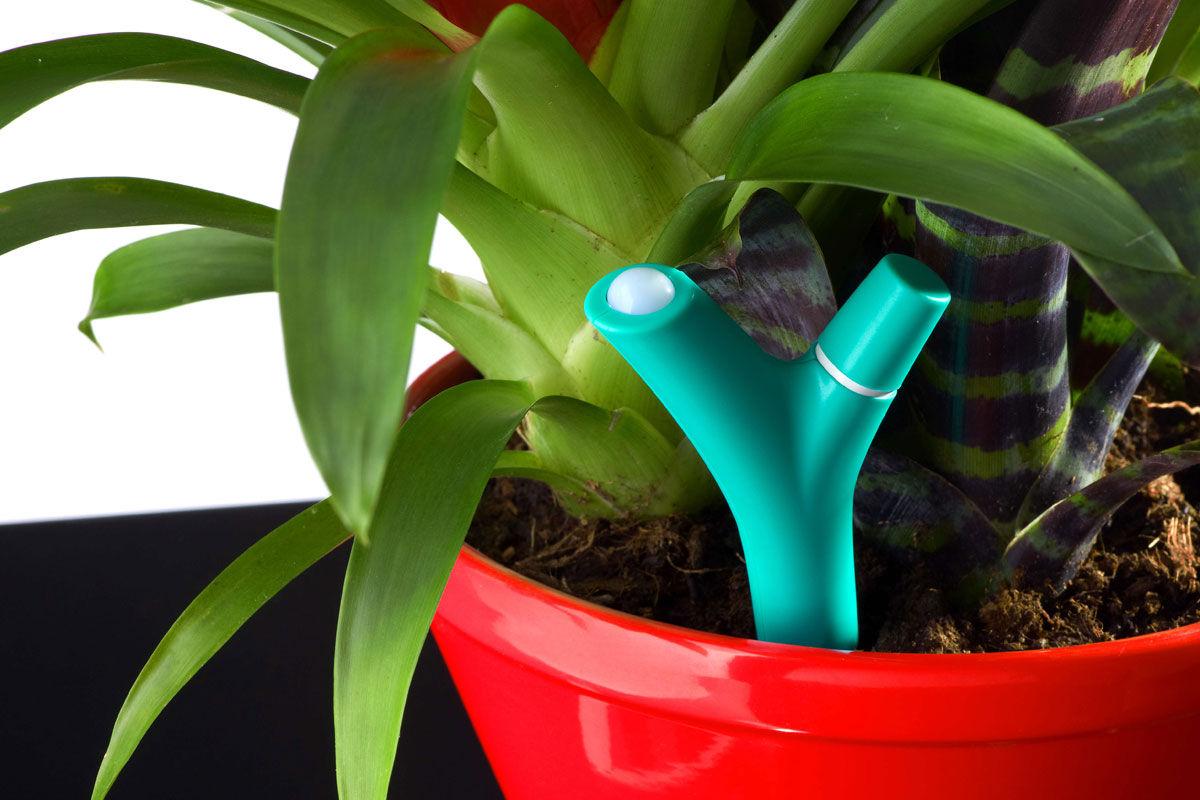 1392758208516 - Test du capteur pour plante Flower Power de Parrot